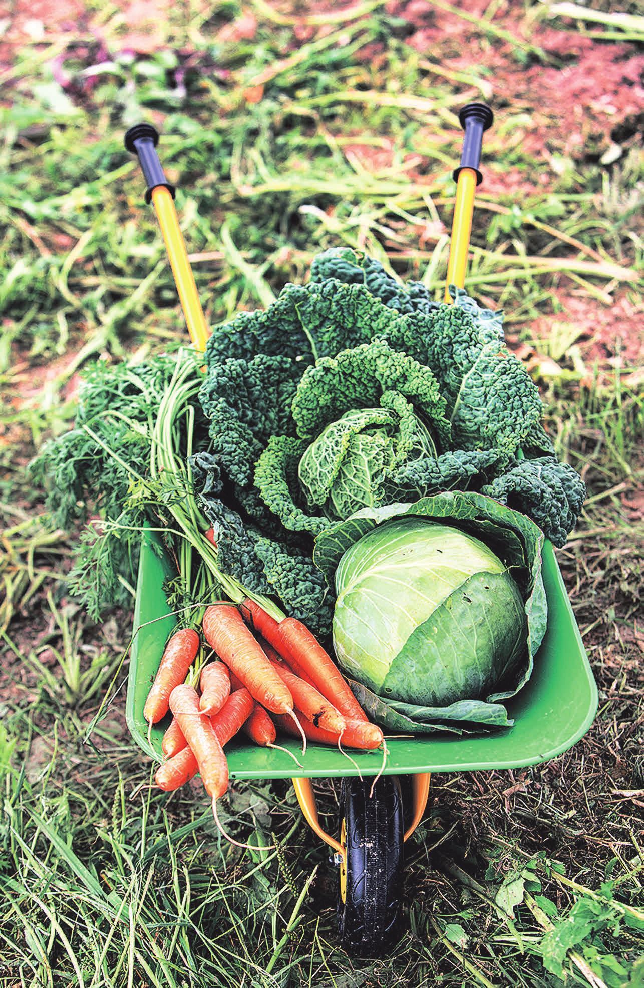 Gemüse und Obst sollten regelmäßig auf dem Speiseplan stehen. Foto: AOK Mediendienst