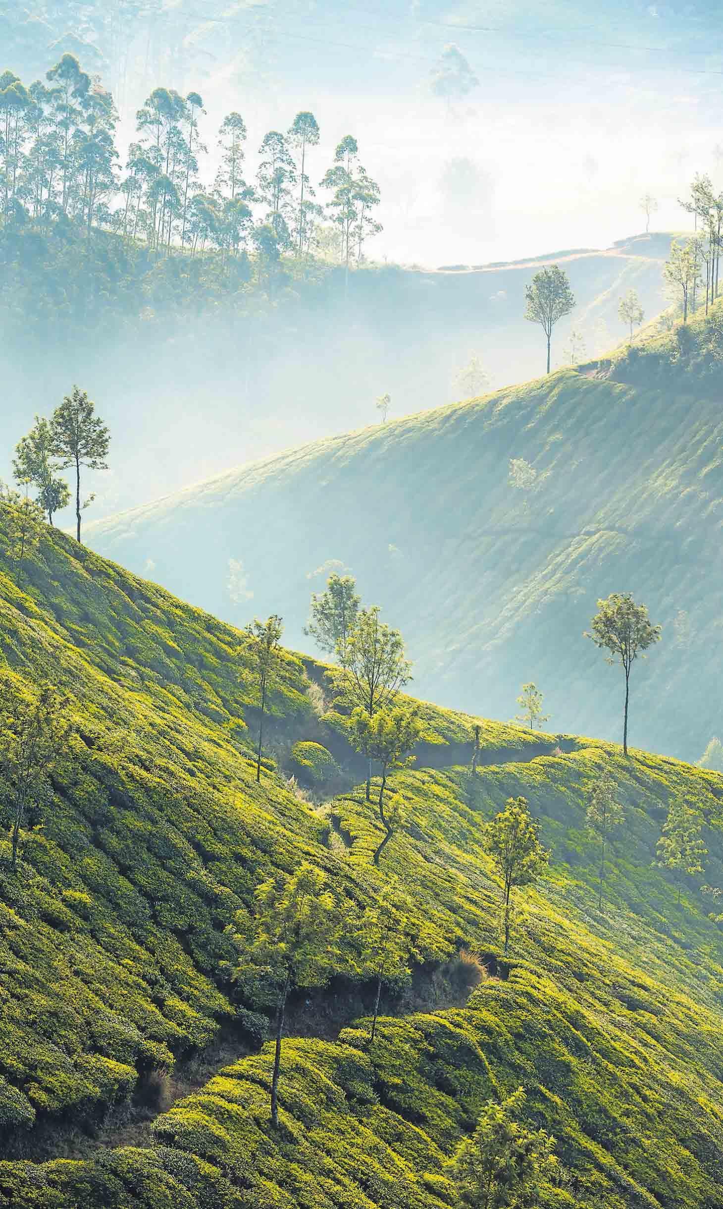 """Verantwortlich wirtschaften. Günter Faltin, Gründer der Stiftung Entrepreneurship, hat als Unternehmer das Projekt """"Teekampagne"""" ins Leben gerufen, das mit Darjeeling-Tee handelt, faire Preise zahlt und Wiederaufforstung betreibt."""