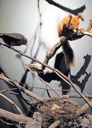 Impressiv: Eichhörnchhen als Eierräuber. Fotos (3): Happersberger