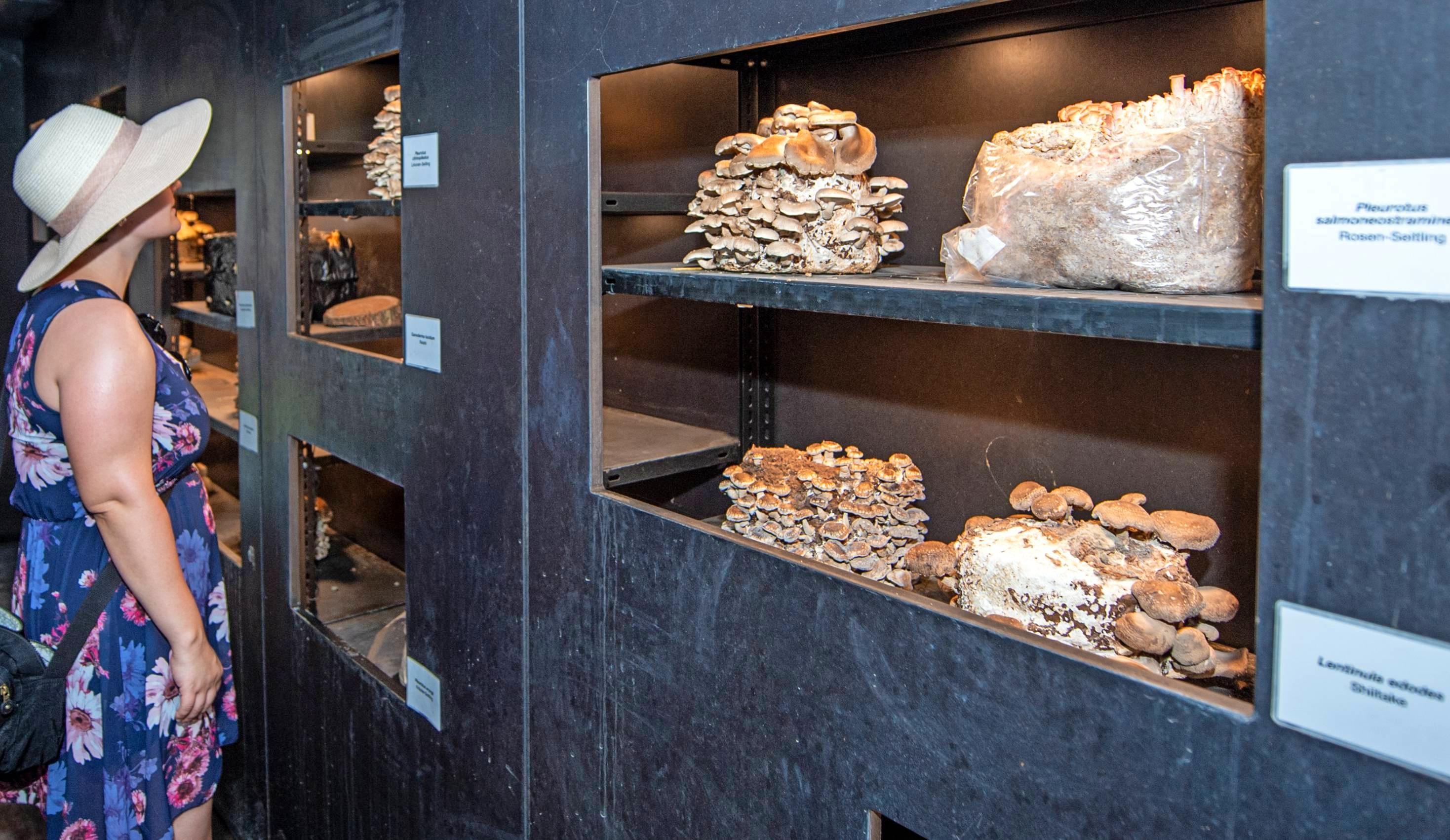 Die Welt der Pilze: Garten und Ausstellung zogen die Buga-Besucher in ihren Bann.