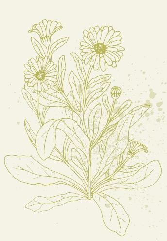 Frühjahrs-Wildkräuter im Porträt Image 4