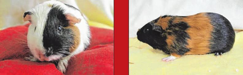 Frini, Frilli, Frino und Frina. Die vier Geschwister sind drei Monate alt und putzmunter, sie werden noch kastriert. Die niedlichen kleinen Racker werden bevorzugt paarweise oder als kleine Gruppe vermittelt.