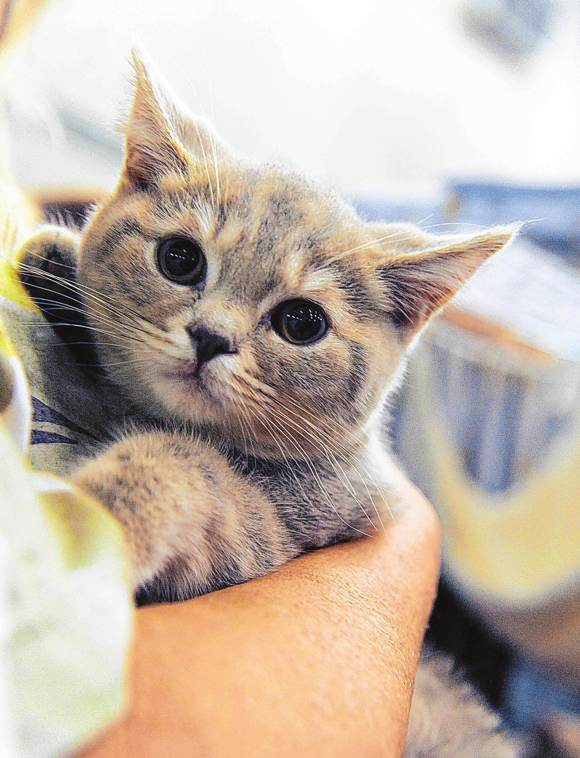 Wenn das Kätzchen schnurrt, ist das nicht immer ein Zeichen, dass es sich wohlfühlt. Foto: Mascha Brichta/dpa-mag