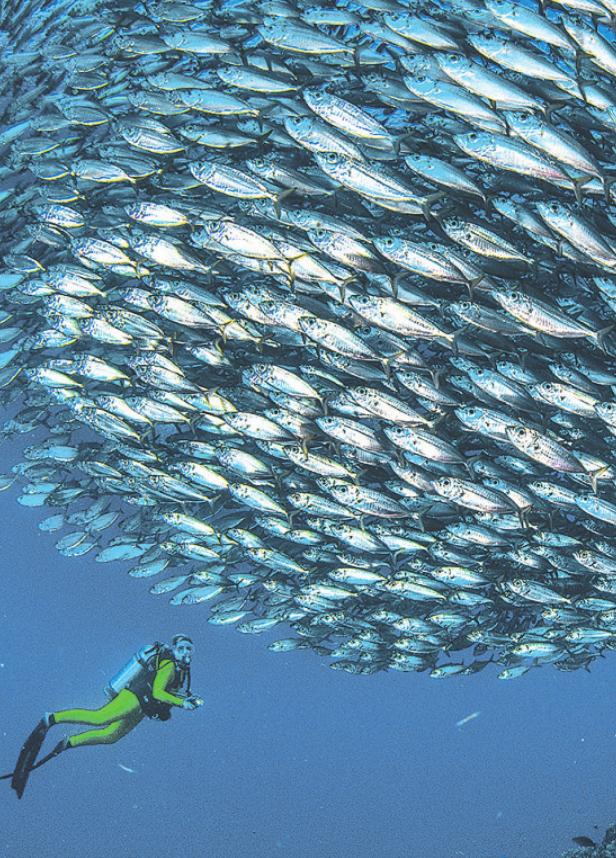 In der vorgebenen Zeit an einen Fischschwarm wie diesen heranzukommen, ist nicht leicht Peter Schultes UW-PIC.de