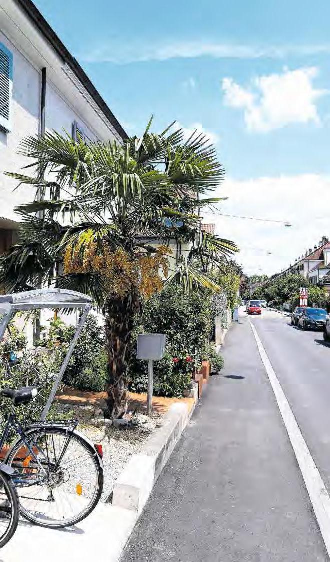 Palmen schmücken Basels Vorgärten.