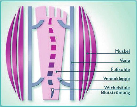 Die Balance der Funktionen für einen gesunden Bewegungsapparat Image 4