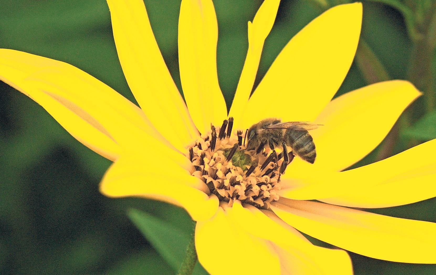 BayernTourNatur: Ökologisches Imkern Image 2