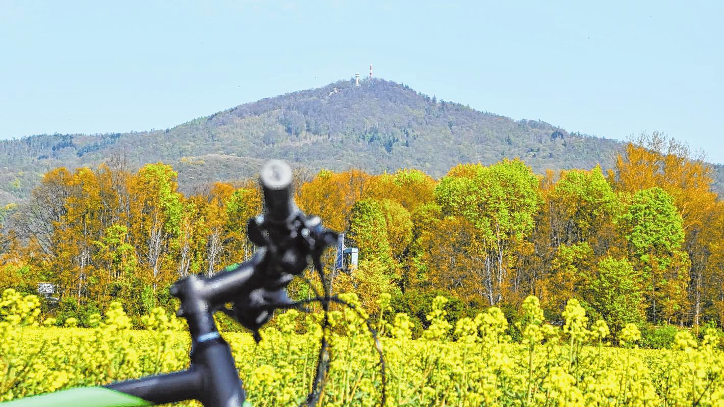 Gelber Raps, grünende Bäume – und im Hintergrund der Melibokus. Bild: Thomas Tritsch