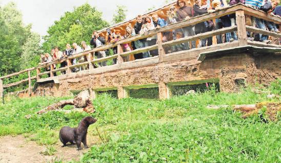 Ferienaktionen rund um Nerz, Otter und Co. versprechen Abwechslung und Spaß. Foto: Jan Piecha © Aktion Fischotterschutz e. V.