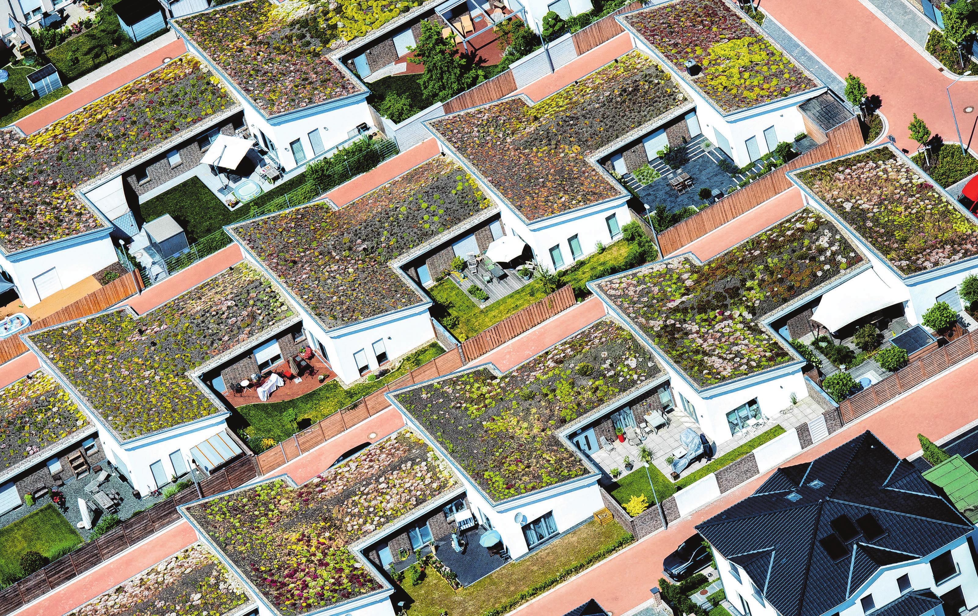 Begrünte Dächer werden derzeit immer beliebter. Hier sind Flach- und Pultdächer kombiniert. Foto: Hauke-Christian Dittrich/dpa