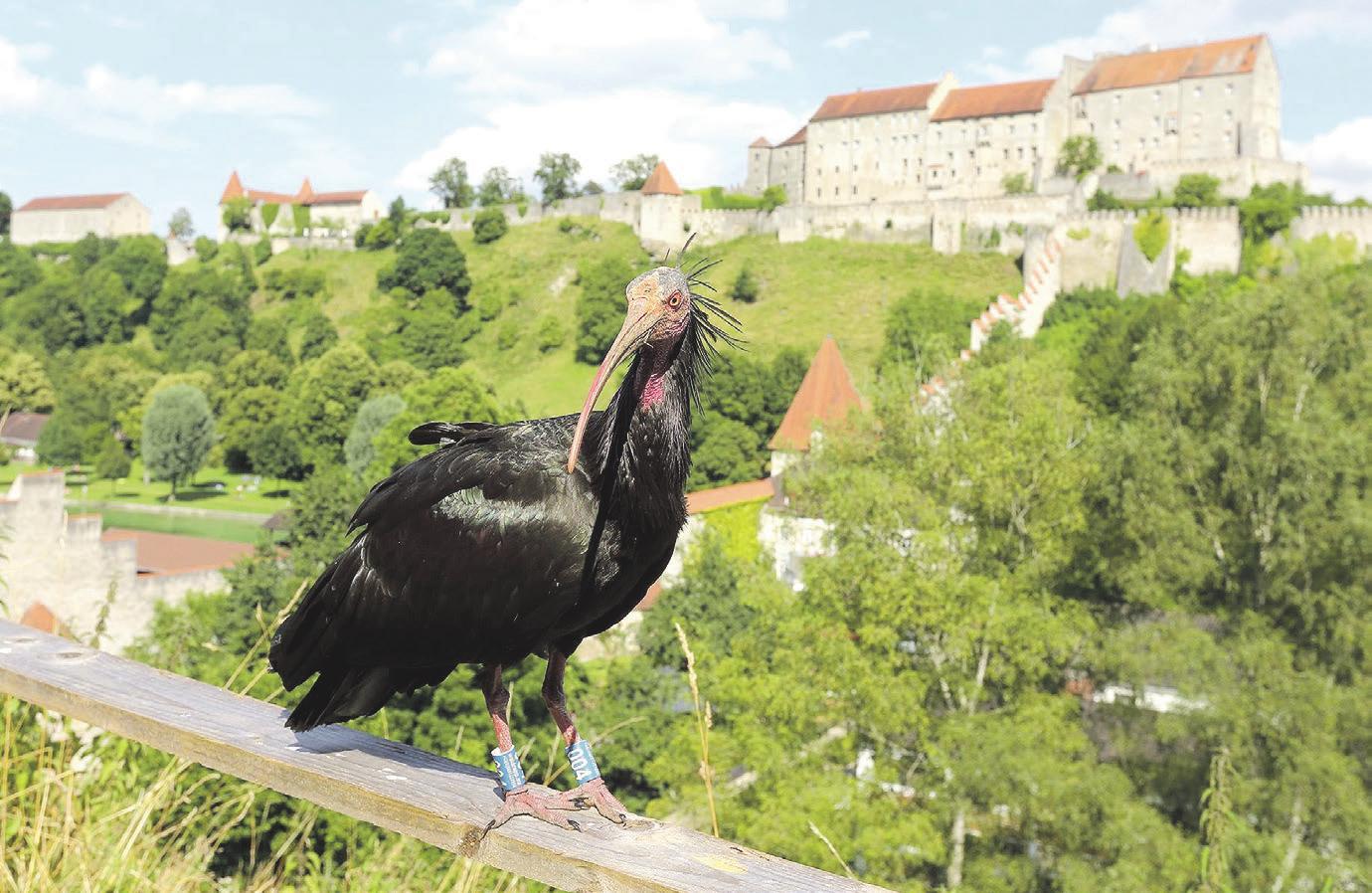 Urlaub dahoam: Kultur- und Freizeitparadies rund um die weltlängste Burg Image 7