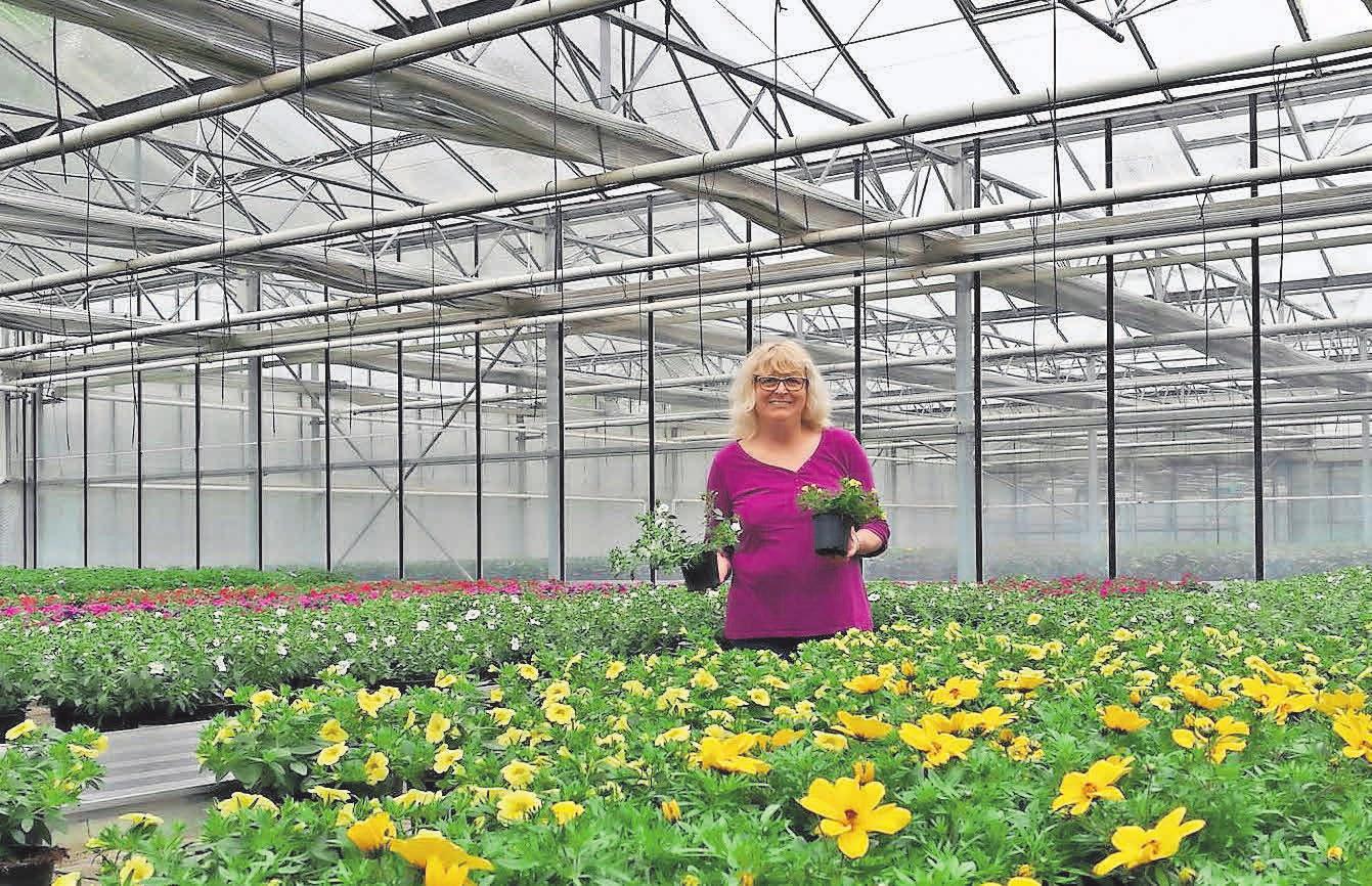 Pflanzen in Hülle und Fülle: In den Gewächshäusern züchten Sabine Hupke und ihr Team Blumenschönheiten für die aktuelle Gartensaison.