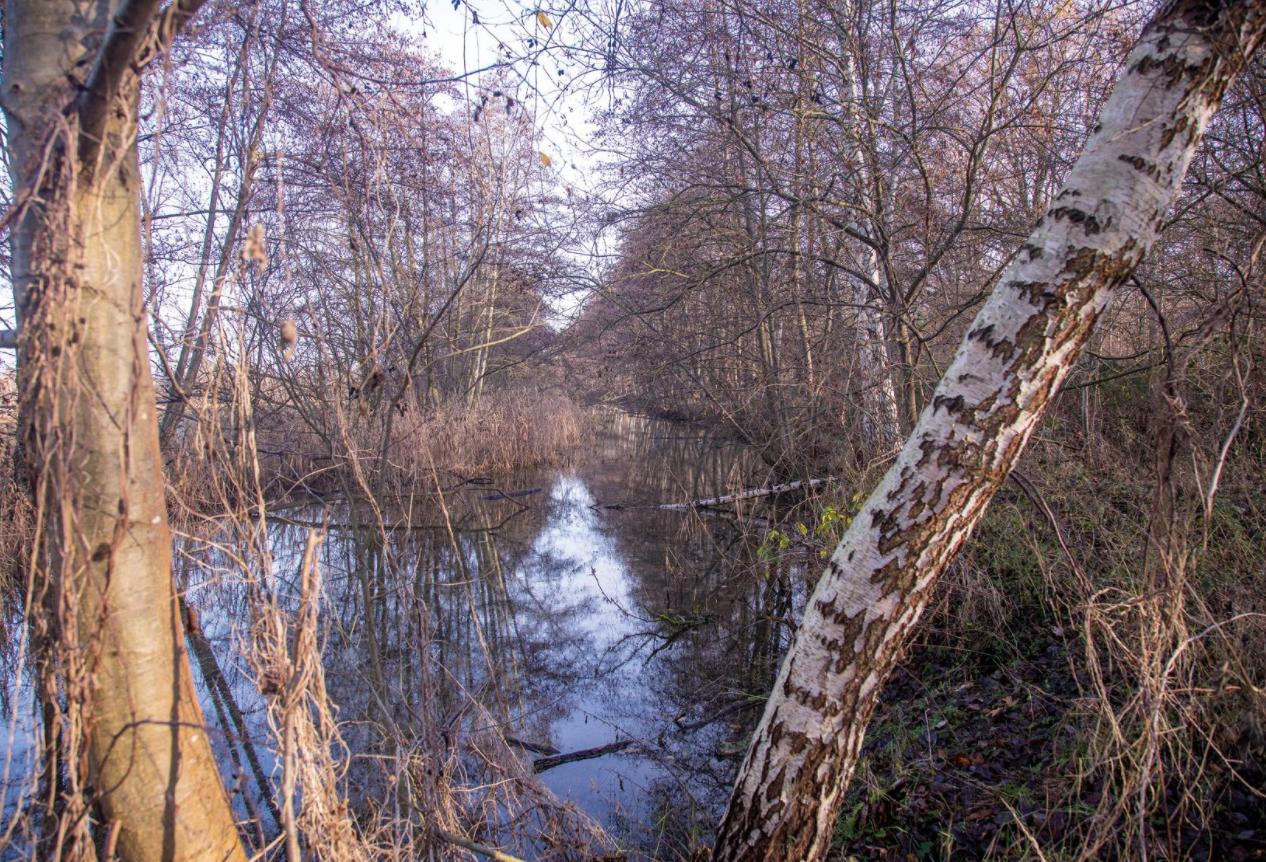 Die Aller: Lebensader aus Wasser.