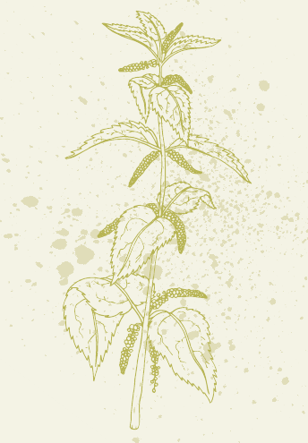 Frühjahrs-Wildkräuter im Porträt Image 5
