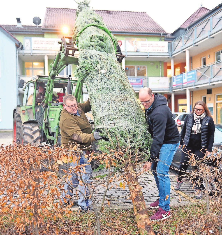 Der Weihnachtsbaum wird aufgestellt und ist bereit zum Schmücken am Sonnabend.FOTOS:HARTWIG, KAZAKOVMAKSIM - FOTOLIA