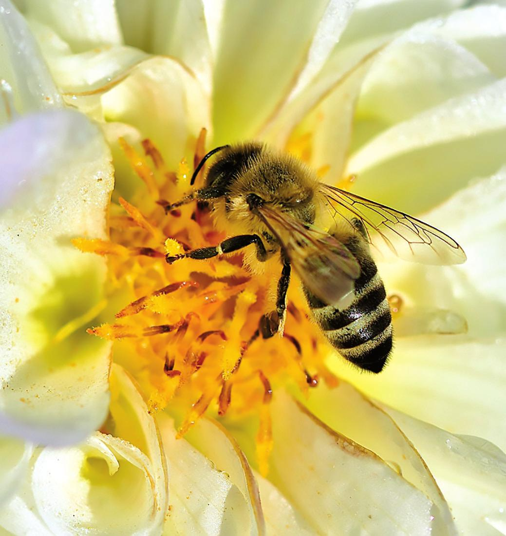Der eigene Garten lässt sich mit einfachen Mitteln bienenfreundlich gestalten Foto: pixabay