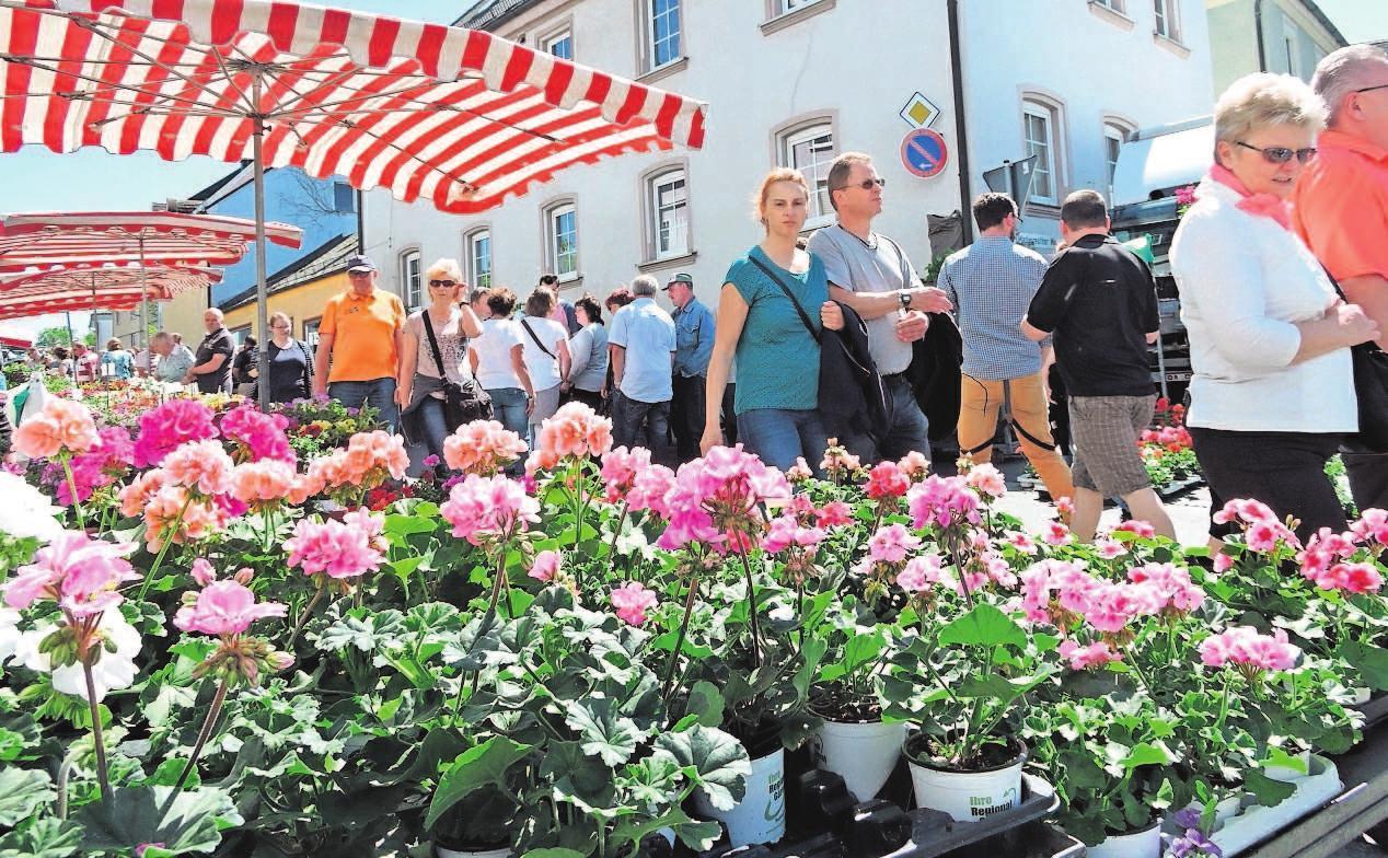 Beim Nailaer Frühling kommen Hobbygärtner garantiert auf ihre Kosten. Fotos: Sandra Hüttner