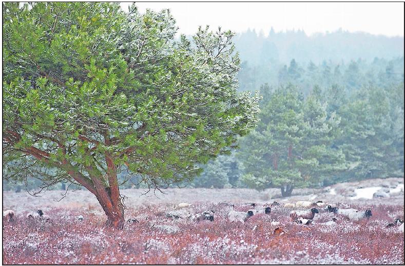 Auch im Winter eigenartig schön: die Mehlinger Heide. Foto: view