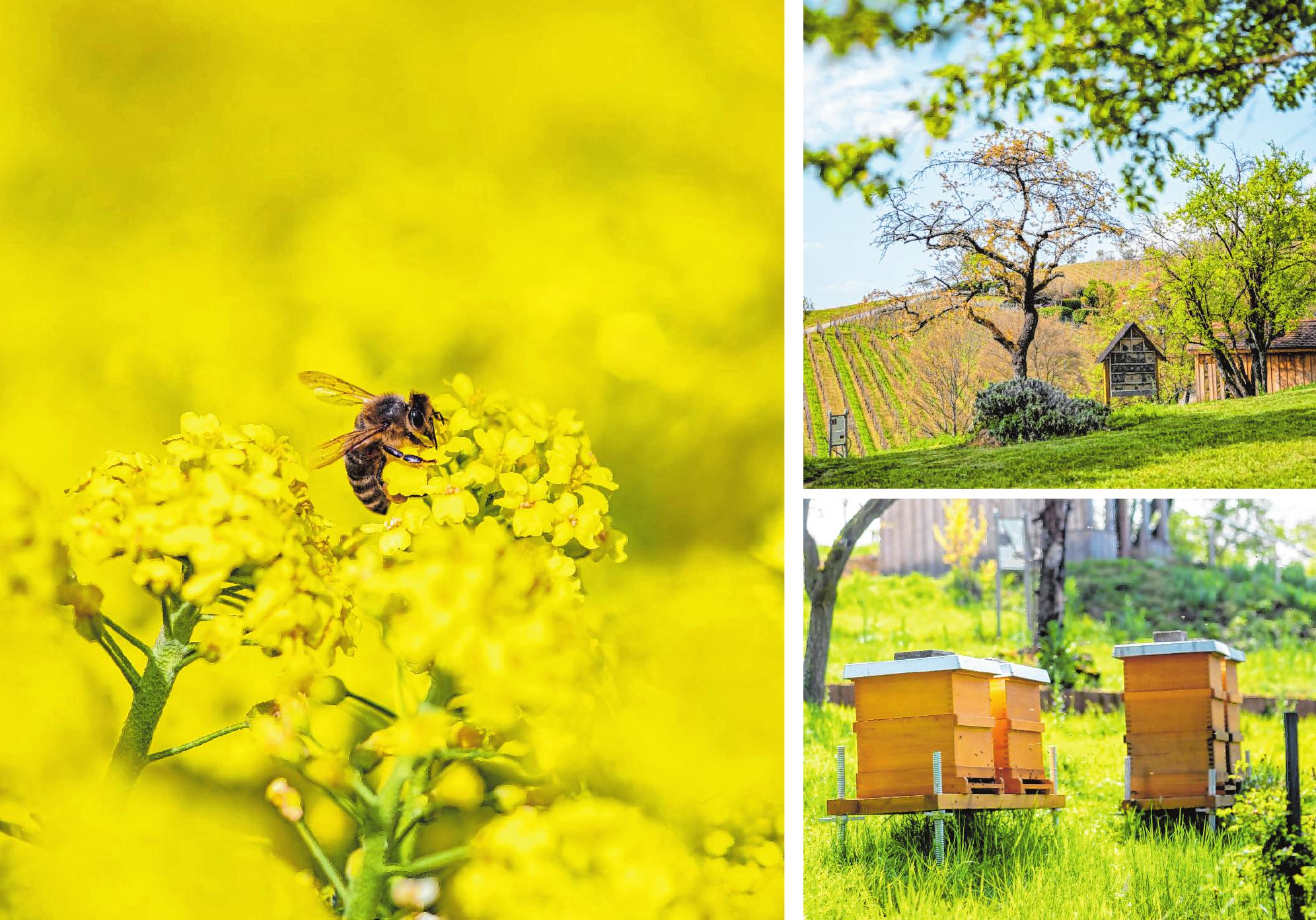 Der Bienenlehrpfad unterhalb des Kirchbergs vermittelt an verschiedenen Stationen elementares Wissen über Honig- und Wildbienen sowie die Imkerei. Bilder: Thomas Neu