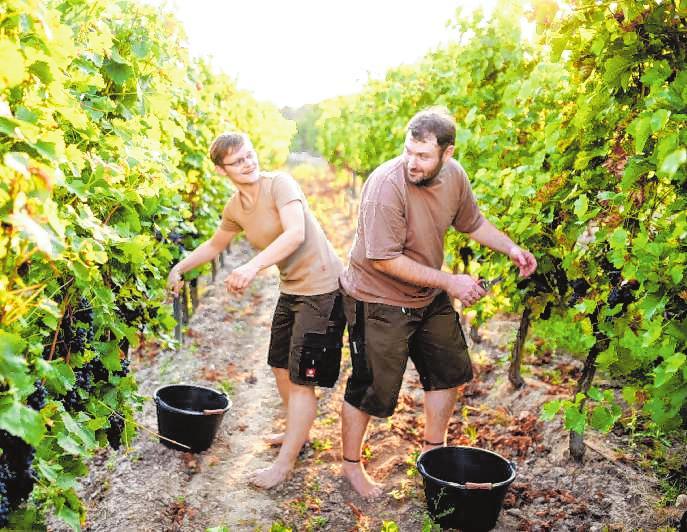Die Barfußwinzer Vanessa und Jens Schreiber achten beim Wein- und Obstbau auf Nachhaltigkeit. Bild: Weinbau Schreiber