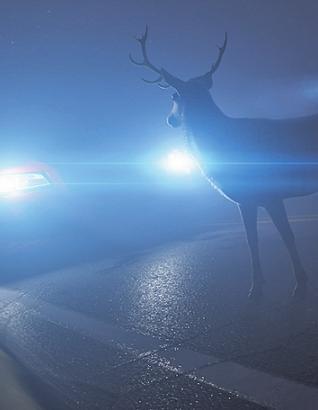Dunkelheit und Nebel machen Wildwechsel besonders gefährlich. Foto: Kaulitzki/ stock.adobe.com
