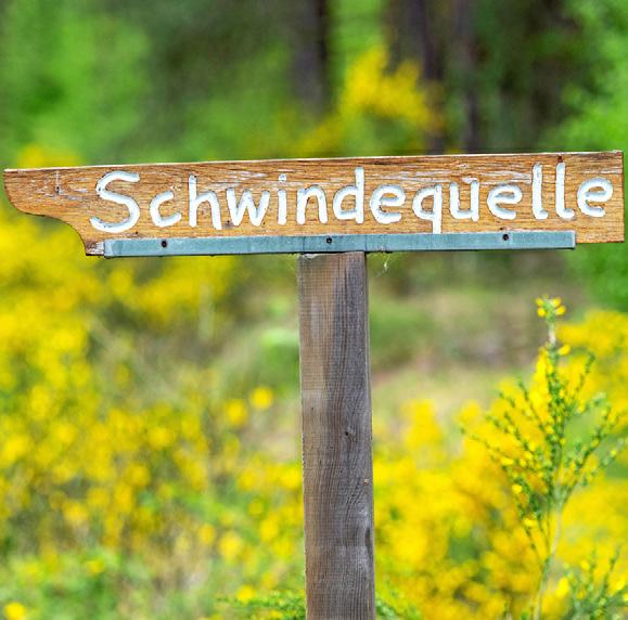 Durch die Heide Image 3