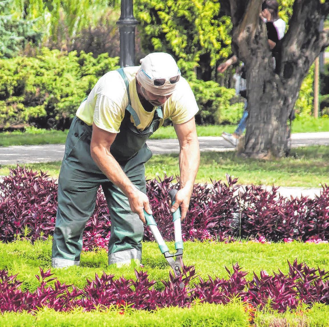Grüne Berufe haben eine blühende Zukunft Image 1