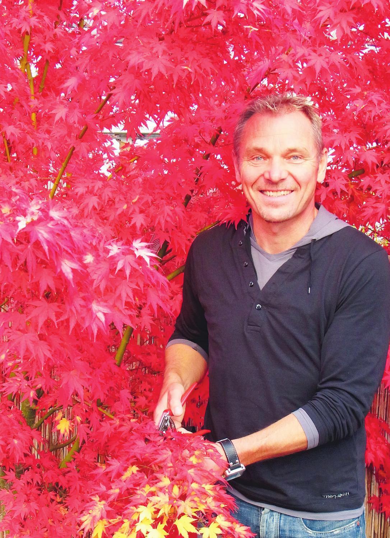 """Leuchtend rot zeigt sich dieser japanische Fächerahorn im Herbst. """"Herbstfarben-Feuerwerk"""" heißt denn auch die Veranstaltung, zu der Holger Hachmann für das Wochenende 12./13. Oktober nach Barmstedt einlädt Fotos: Skibbe"""