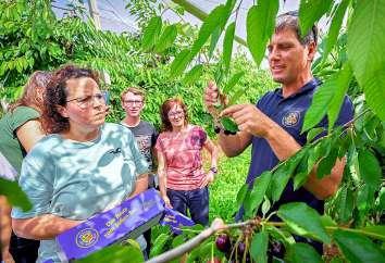 Direkt beim Erzeuger konnten sich die Edeka-Mitarbeiter davon überzeugen, wieviele Arbeitsschritte nötig sind, bis eine Kirsche ihren Weg vom Baum ins Supermarktregal gefunden hat. FOTOS: EDEKA-LEHNE