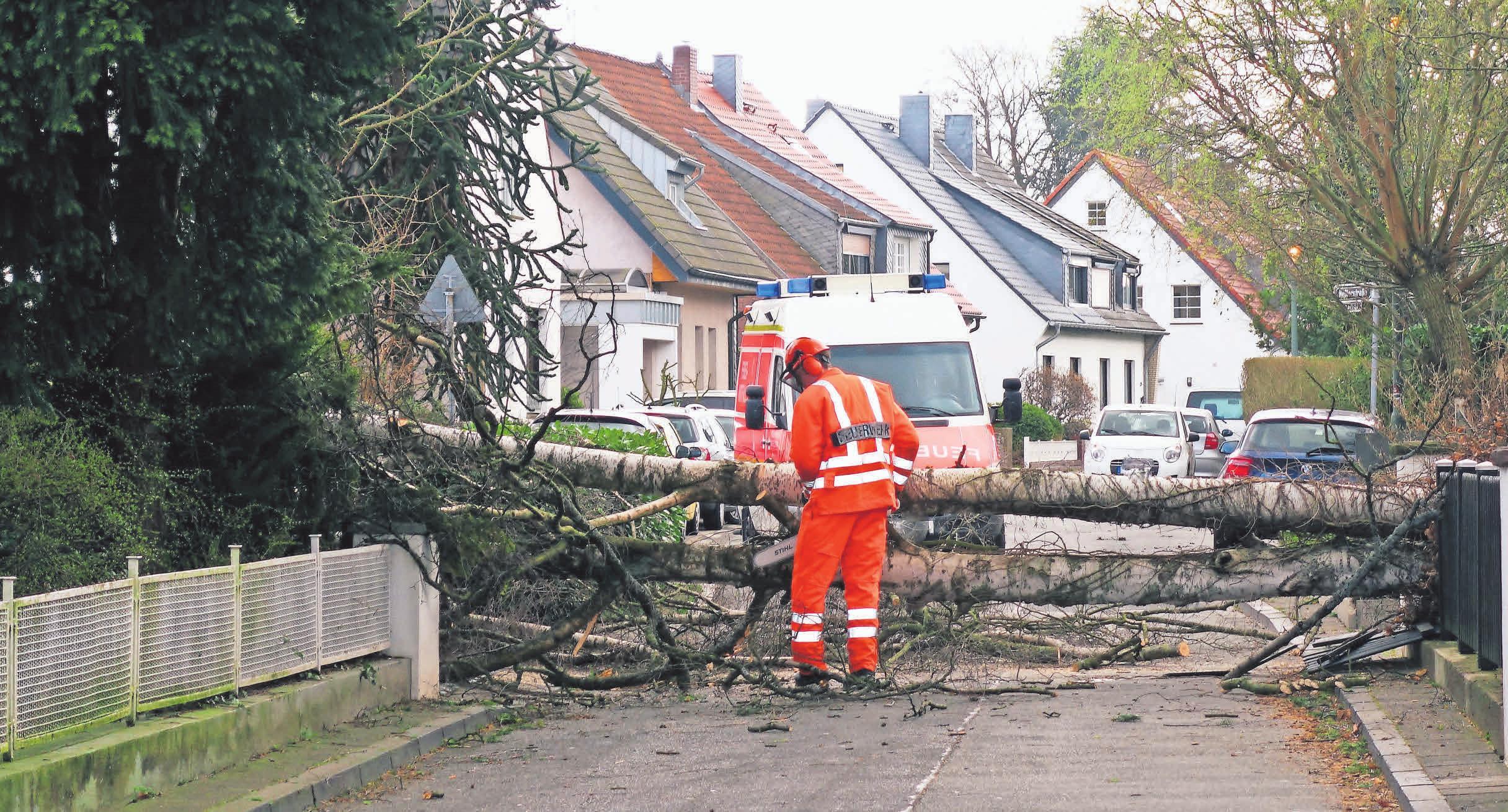 Haus und Grundstück müssen in einem sicheren Zustand sein. Daher sollten auch regelmäßig alle Bäume auf dem Grundstück überprüft werden. Foto: dpp Autoreporter