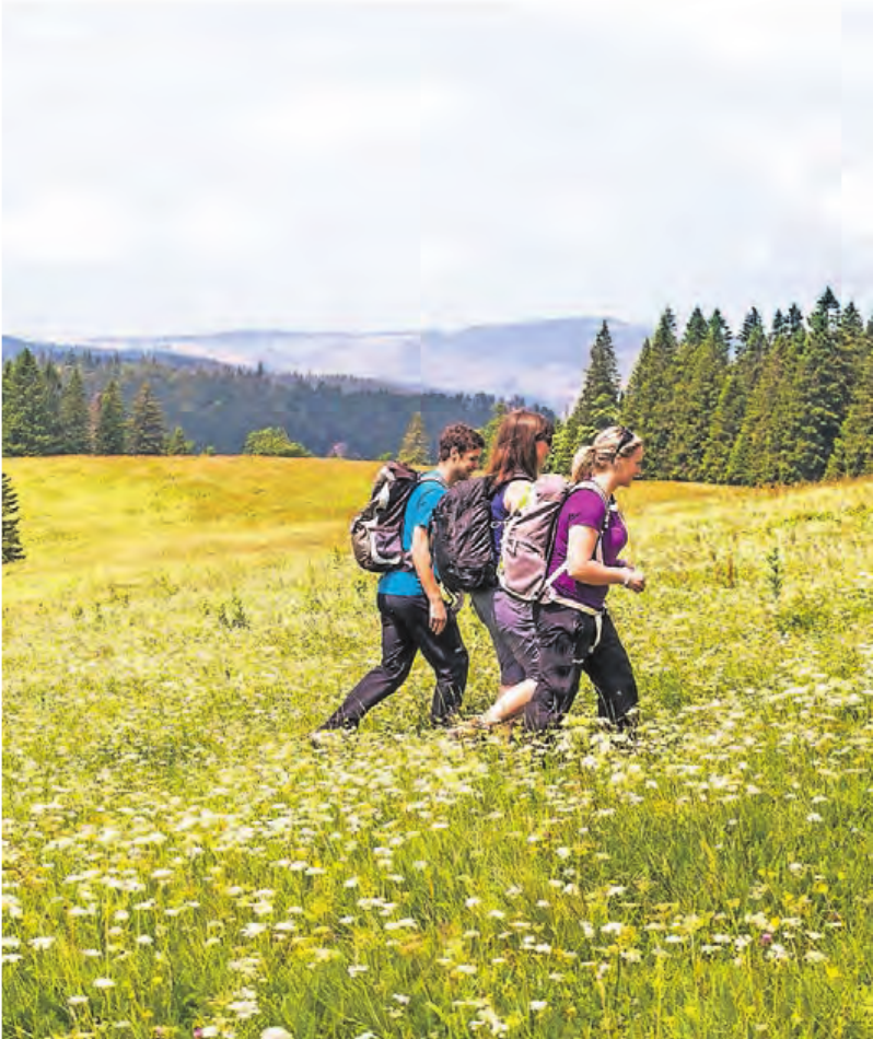 In Frühling und Sommer wandert man am Feldberg durch blühende Wiesen.