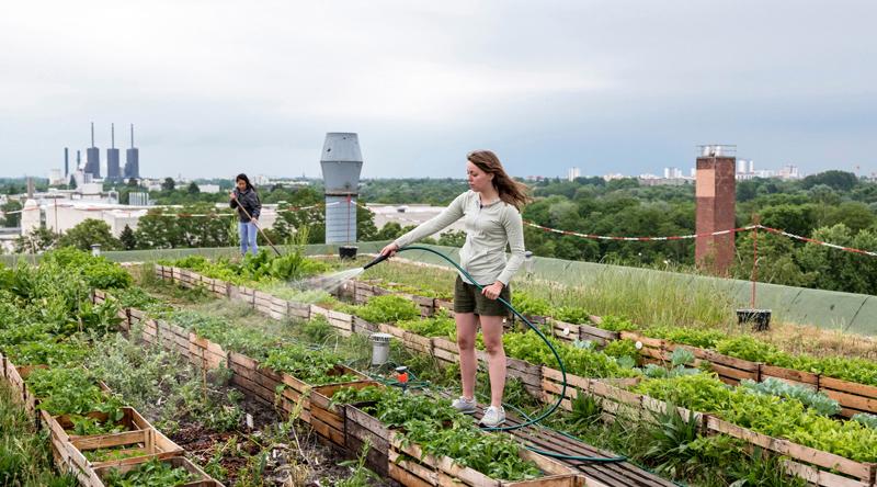 Sozialer Kitt? Urban Gardening auf den Dächern Berlins.