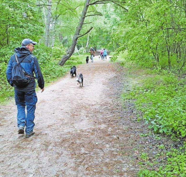 Lehrreich: ein Spaziergang durch die gut eine Million Jahre alte Dünenlandschaft. FOTO:DBU/DENSTORF/FREI
