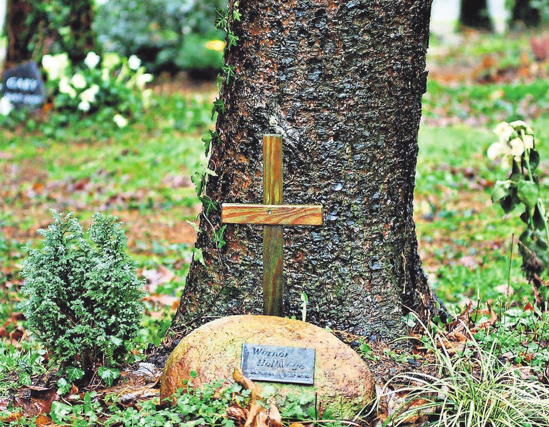 Beschaulich: Bei einer Baumbestattung steht die Urne am Fuße der Pflanze. Foto: Pixabay