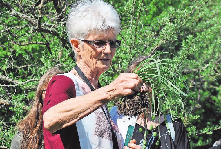 Kräuterhexe Margaretha Ehlvers erklärt die Pflanzen im Heilpflanzengarten.Foto: Archiv