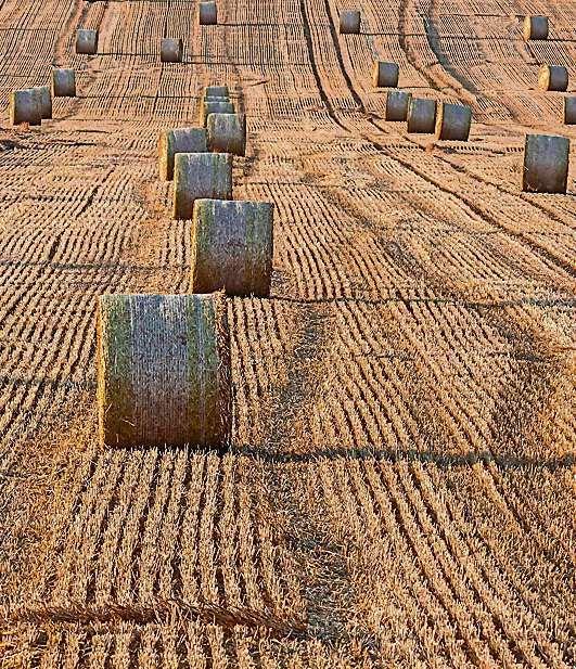 """Schnell vom Acker. Biokraftstoffe aus Stroh, Restholz und Altspeiseöl könnten das """"Teller oder Tank"""" Problem lösen, weil sie nicht direkt mit der Produktion von Nahrungs- und Futtermitteln konkurrieren."""