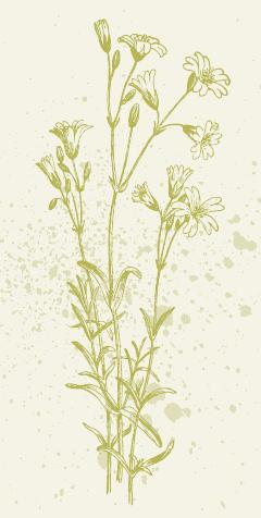 Frühjahrs-Wildkräuter im Porträt Image 7