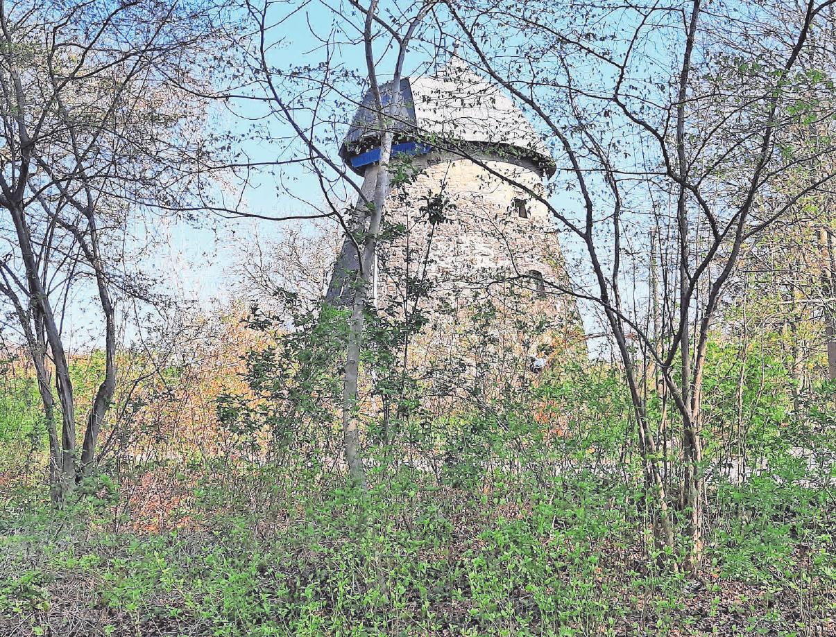 In Gehrden gibt es viel zu entdecken, unter anderem die alte Mühle auf dem Gehrdener Berg. Fotos (2): Archiv
