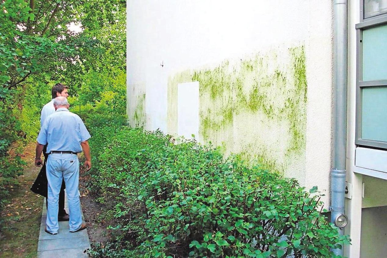 Grünfärbungen an der Fassade sehen unschön aus und beeinträchtigen den Wert einer Immobilie. Biozid-ausgerüstete Fassadenfarben bieten Schutz. Foto: djd/dli