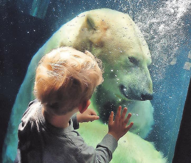 Tiere hautnah erleben im Erlebnis-Zoo Hannover.