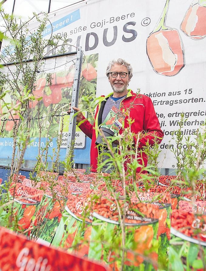 Klaus Umbach hat den Anbau von Goji-Beeren in Heilbronn regional gemacht.