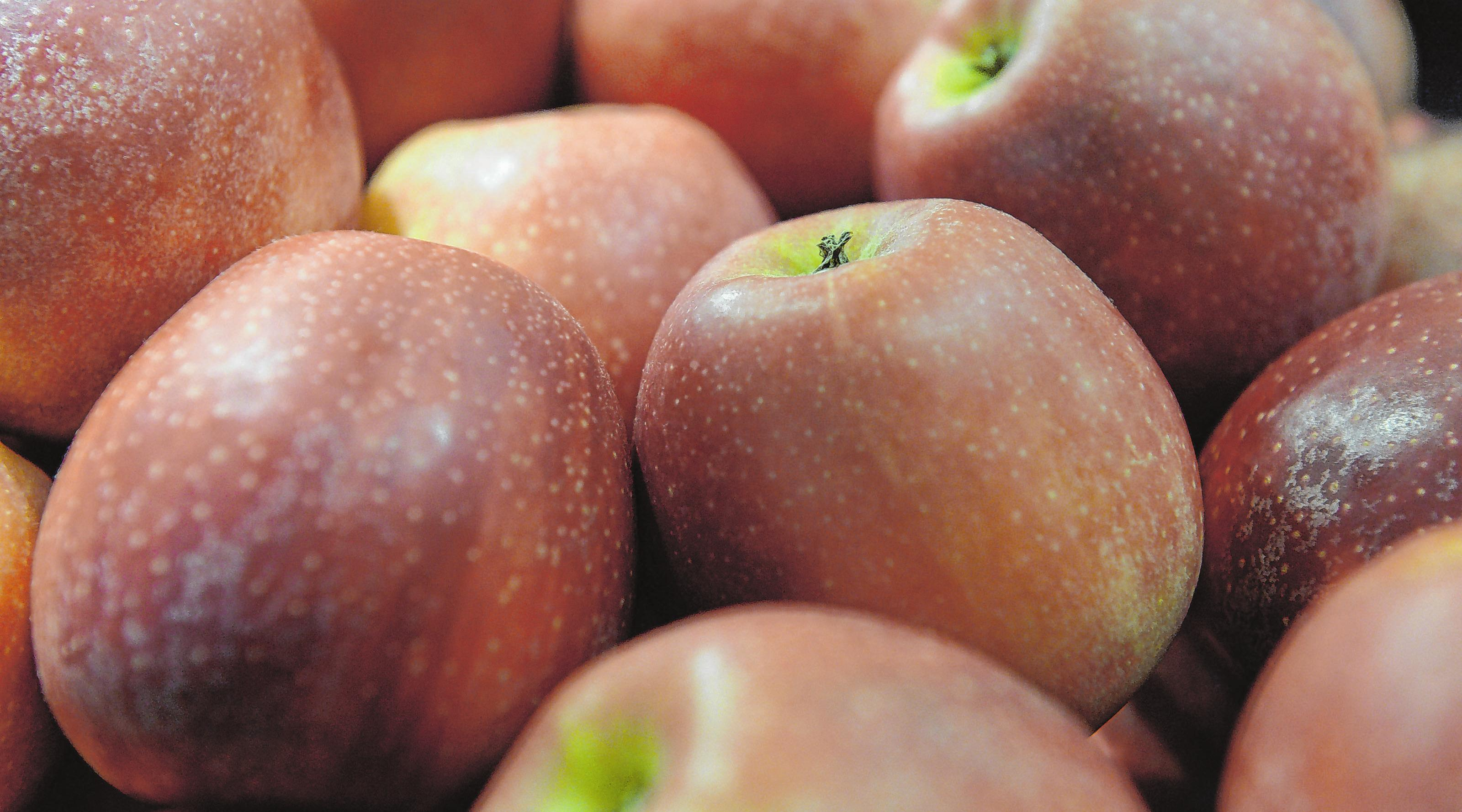 Äpfel werden von den Brandenburgern gern und häufig gegessen. Am besten sind natürlich Früchte aus regionaler Produktion. Foto: Andrea Warnecke/dpa-mag