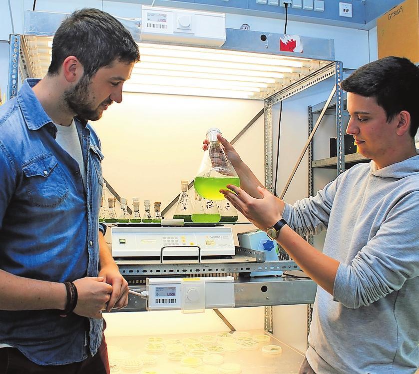 Was tut sich im Glas? Lukas Punstein (links) und Niko Dalheimer prüfen erste Ergebnisse ihrer Versuchsreihe. FOTO: MONIKA KLEIN
