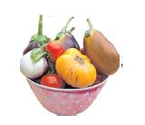 Gemüse anbauen, alte Sorten wieder entdecken experimentieren, sich austauschen – Nachhaltigkeit tut gut