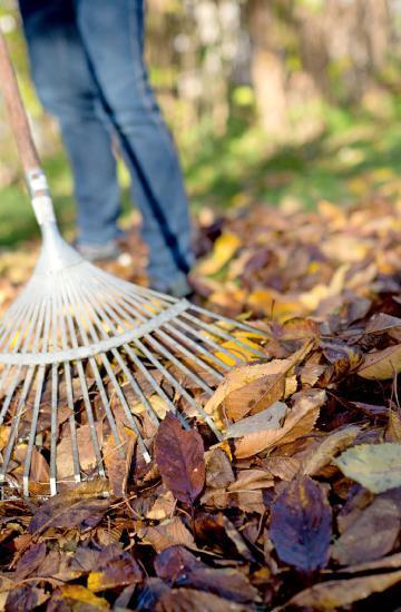 Im Herbst sollte das Laub in Ecken des Gartens angehäufelt werden. Foto: dpa
