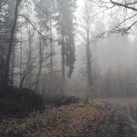 Im Einsatz für Wald und Holz Image 3