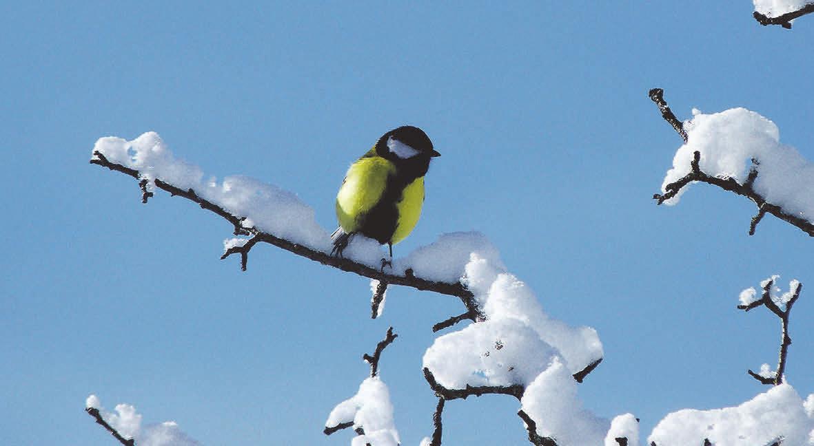 Es gibt viele Vogelarten, die die heimischen Gefilde auch in den kalten Monaten nicht verlassen. Foto:pxhere.com