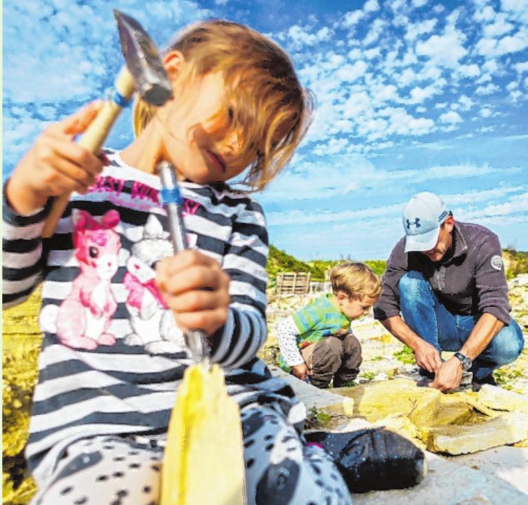 Schätze aus vergangenen Zeiten entdecken: In Fossiliensteinbrüchen lassen sich mit Hammer und Meißel versteinerte Urzeittiere und -pflanzen aus dem Gestein holen. FOTO: DIETMAR DENGER