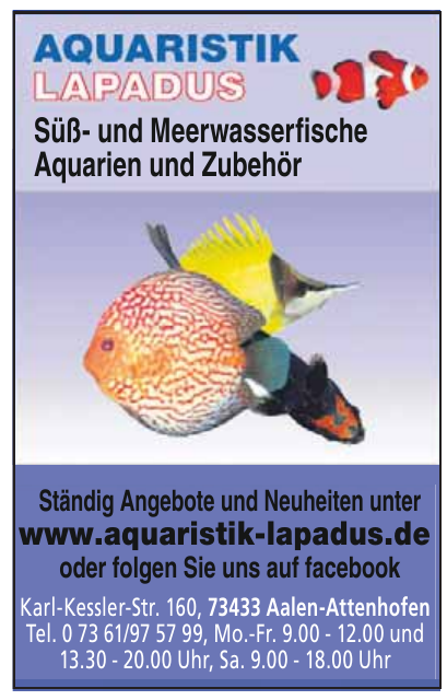 Aquaristik Lapadus
