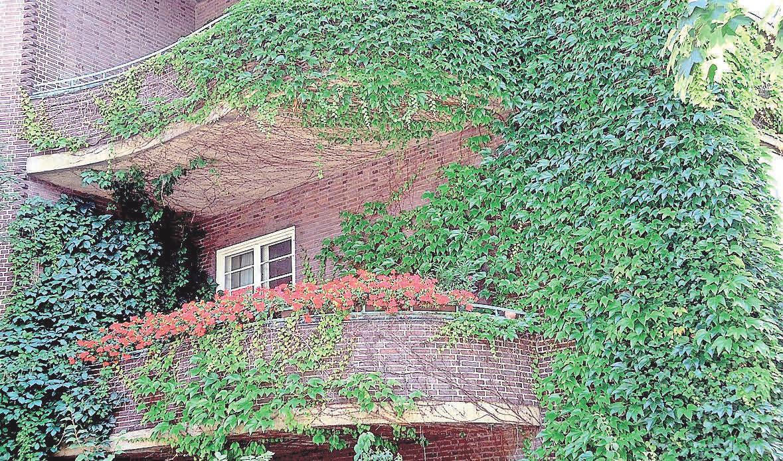 Wilder Wein an der Fassade. Foto: Busche